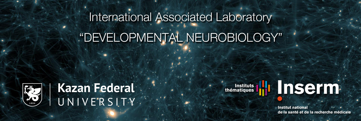 International-Associated-Laboratory-of-Developmental-Neurobiology